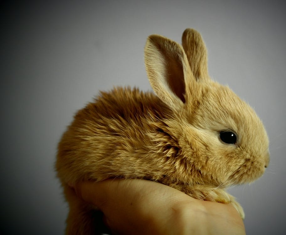 Cute rabbit, posed. Do the French make sense? No!