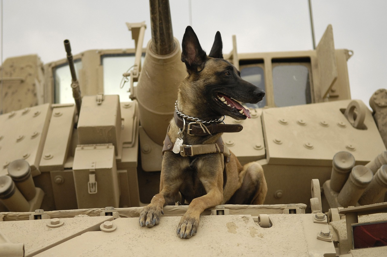 an army dog