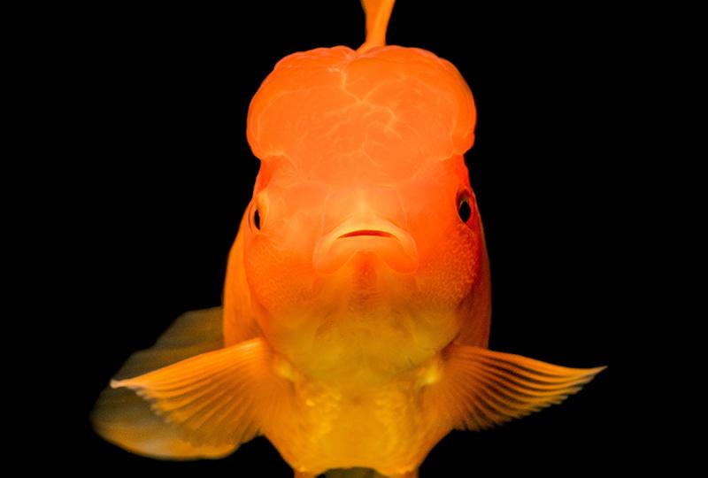 Spanish Idioms Expressions Fish