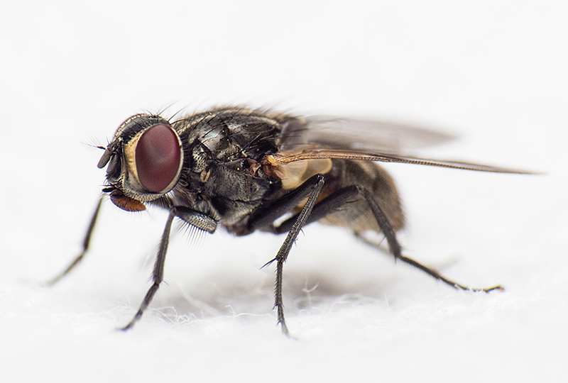 Spanish Idioms Expressions Flies