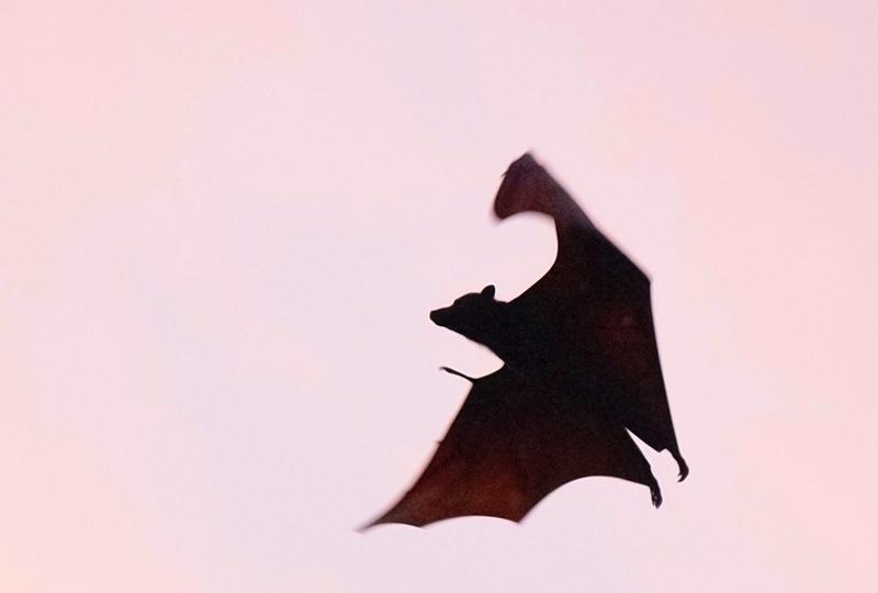 Spanish Idioms Expressions Vampire Vampiro