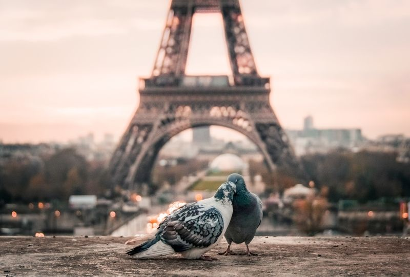 Two pigeons in front of Eiffel Tower