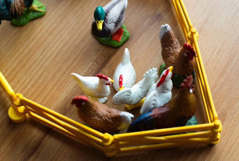 miniature chickens and ducks