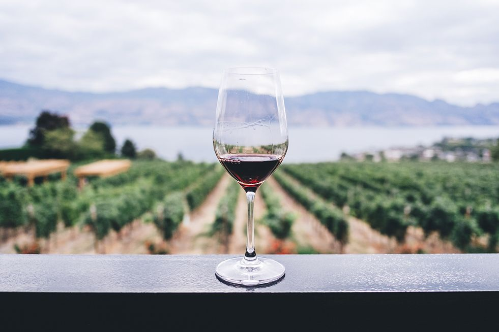 Ultimate Guide to Spanish Wine Vocabulary: Useful Words and Phrases
